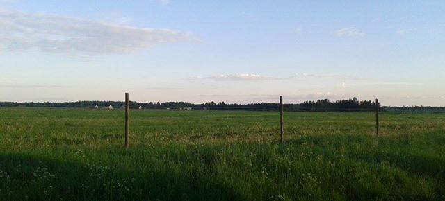 Kesäinen niitty. Kuva: Laura Leipakka