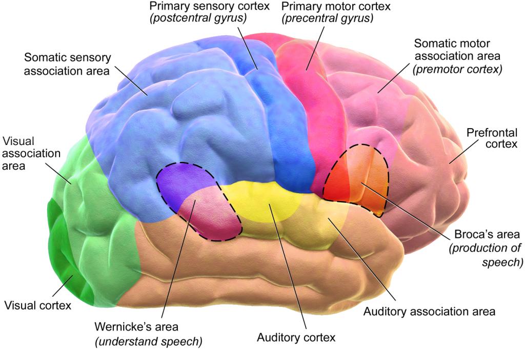 Aivot hoi – onko ketään kotona?