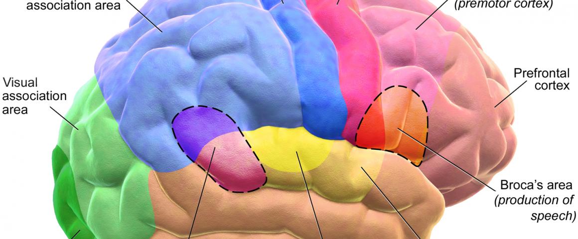 Aivot hoi – onko ketään kotona.